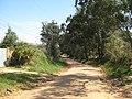 RUA BETTY HASS DE CAMPOS - INDAIATUBA - panoramio (1).jpg