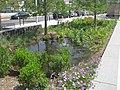 Rain Garden (15455930908).jpg