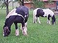 ReußensteinPferde.jpg