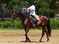 Riding a Horse Backwards 1110781.jpg