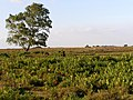 Ridley Plain, New Forest - geograph.org.uk - 214050.jpg