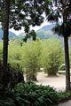 Rio de janeiro, jardim botanico, bambù.JPG