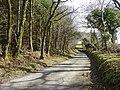 Road by woodland edge near Blaen-y-coed, Cynwyl Elfed - geograph.org.uk - 1185497.jpg