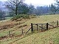 Rocky Knoll, Near Pelter Bridge - geograph.org.uk - 110671.jpg