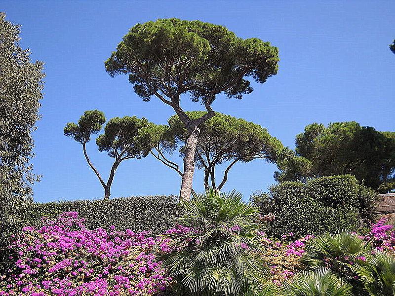 Roma Villa Medici Gardens.jpg