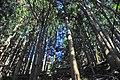 Ruins forest - panoramio.jpg