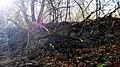 Ruiny Sanktuarium Matki Bożej Bolesnej z 1743 r., Kapliczna Góra 2018.10.31 (15).jpg