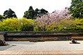 Ryoan-ji, Hojo Teien (Rock Garden) -1 (April 2016) - panoramio.jpg