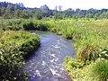 Rzeka Biała- okolice Kuźniczki - panoramio.jpg
