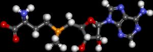 S-Adenosyl methionine - Image: S adenosylmethionine
