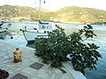 SKOPELOS,SPORADES,GREECE - panoramio (2).jpg