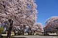 Saiki, Tsukuba, Ibaraki Prefecture 305-0028, Japan - panoramio.jpg