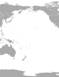 Saint Lawrence Island shrew species of mammal