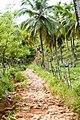 Samaná Province, Dominican Republic - panoramio (164).jpg