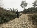Samthar Plateau in Darjeeling 06.jpg