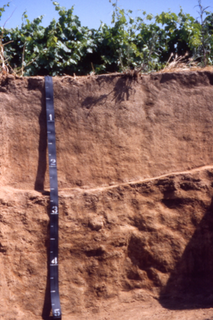 San Joaquin (soil) soil type