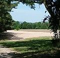 Sand im Wald - panoramio.jpg