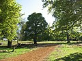 Sandy track in Richmond Park - geograph.org.uk - 1273769.jpg