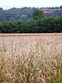 Sangano, vista della Cascina Paraccia dalla pista ciclabile sul Sangone - panoramio.jpg