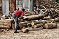 Sawing Logs, Aksum (8204532943).jpg