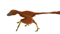 Scansoriopteryx restoration.png