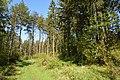 Schleswig-Holstein, Fockbek, Naturschutzgebiet Fockbeker Moor NIK 1614.jpg
