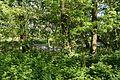 Schleswig-Holstein, Neuendorf, Naturdenkmal NIK 6246.JPG