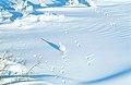 Schneehuhn 2000-11-22.jpg