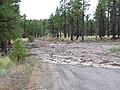 Schultz Pass Road (9361150558).jpg