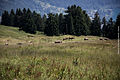 Schweiz Reise . Sommer 2013 . Ansichten 18.jpg