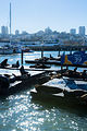 Sea lions in Pier 39, San Francisco (10934953784).jpg
