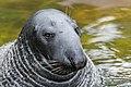 Seal Image.jpg
