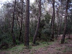 external image 250px-Secondary_succession_Mediterranean_forest.jpg