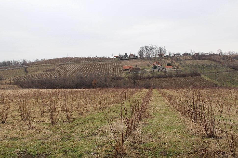 Selo Mrčić - opština Valjevo - zapadna Srbija - Panorama 3 - Pogled prema istoku - Vinogradi