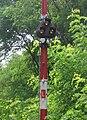 Semaphore CSD with subsidiary signal b.jpg