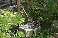 Sennyuji Kyoto28n4200.jpg
