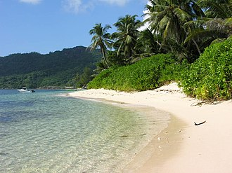 Scaevola taccada - Seashore habitat of Scaevola taccada on a beach in the Seychelles.