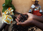 Shea Nuts - West Africa Trade Hub (17255623812).png
