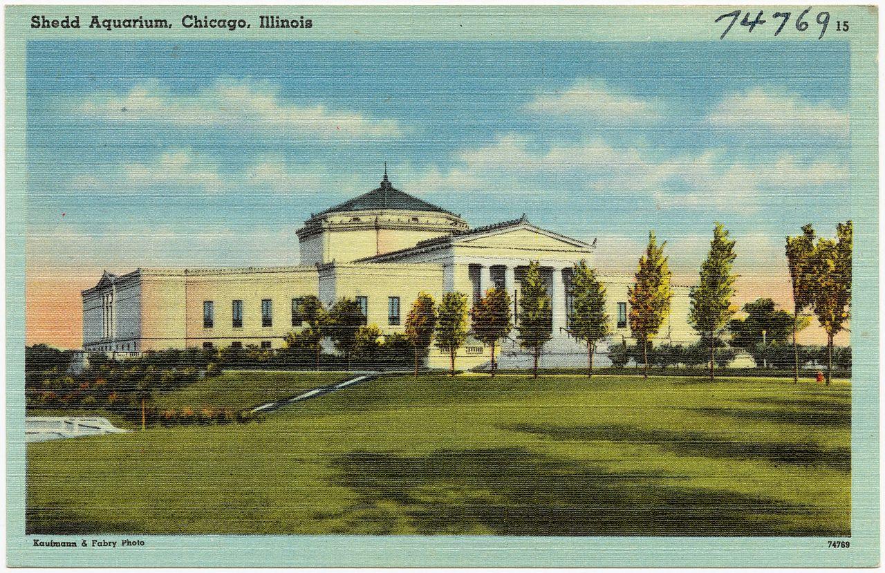 File Shedd Aquarium Chicago Illinois 74769 Jpg Wikipedia
