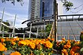 Sheraton Vancouver Wall Center flowers 01.jpg