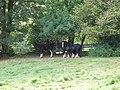 Shire horses at Ty-isa - geograph.org.uk - 556847.jpg