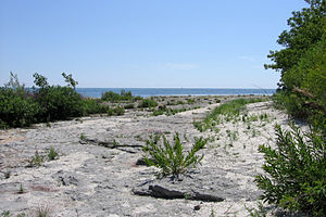 Rock Point Provincial Park - A shore in the park with many fossils.