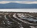 Shoreline near Craigavad (3) - geograph.org.uk - 749770.jpg