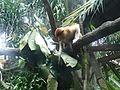 Singapore Zoo - panoramio (2).jpg