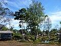 Sinouk Coffee Resort 001 - panoramio.jpg