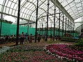 Snap from Lalbagh Flower Show Aug 2013 7873.JPG