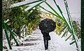 Snowy April day of Karaj - 16 April 2018 10.jpg