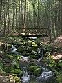 Snyder Middleswarth Hemlocks Trail footbridge.jpg