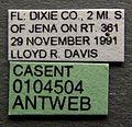 Solenopsis invicta casent0104504 label 1.jpg