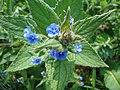 Some Plant (2483470979).jpg